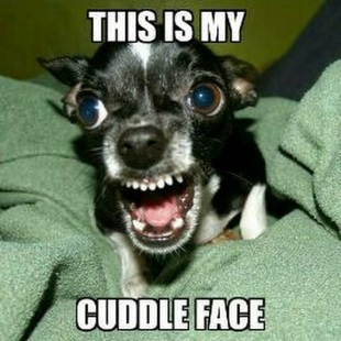 This-Is-My-Cuddle-Face-Funny-Meme